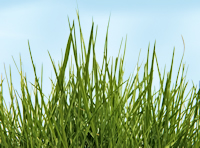 Close up of grass and sky