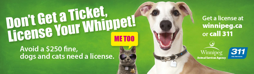 Don't get a ticket, license your whippet!
