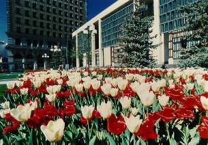 City Hall in Spring, City of Winnipeg Photo