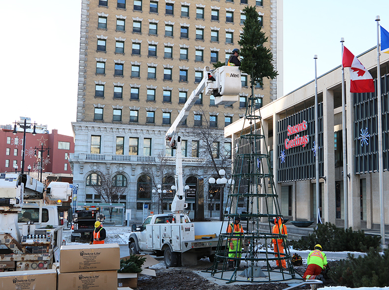 The new City Hall Christmas tree being installed