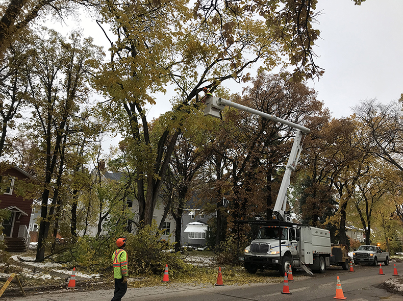 It's estimated around 30,000 City-owned trees were impacted by the recent snowstorm