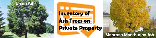 Urban Forestry Branch to conduct inventory of Ash trees on private property